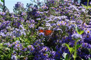 Butterflies fill the garden