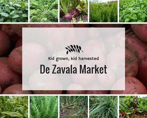 De Zavala Market